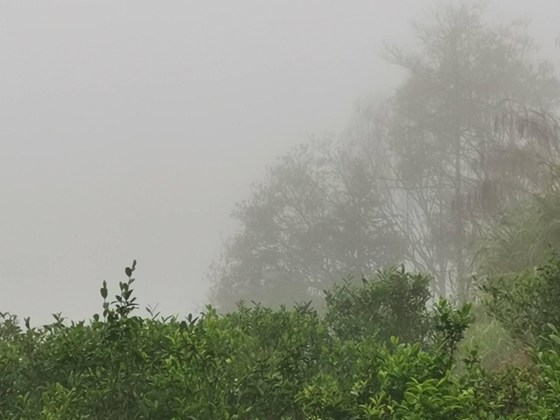 丰顺县洋西坑原生态高山茶园一览