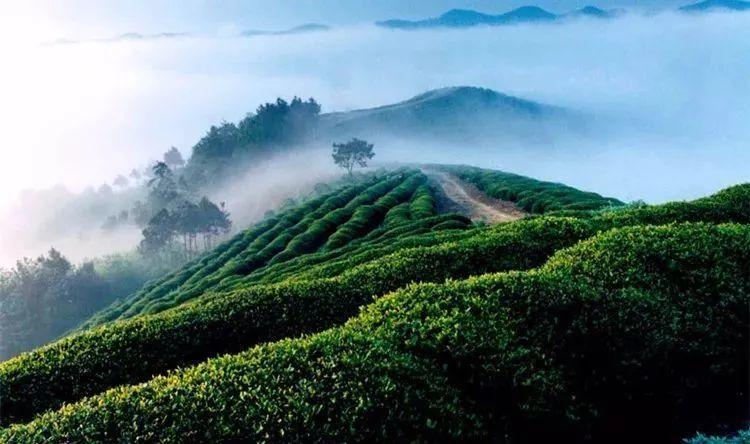 这10位人物,影响了整个茶叶历史进程
