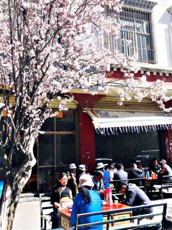读懂西藏茶文化